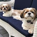 Bailey and Tucker - Dogs